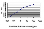 H00051592-M01 - TIF1-gamma / TRIM33