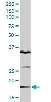 H00079833-D01P - Gemin-6