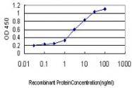 H00080833-M01 - Apolipoprotein L3 / ApoL3