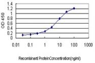 H00081888-M01 - Hydroxypyruvate isomerase / HYI