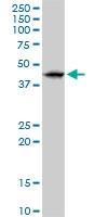 H00140545-D01P - RNF32