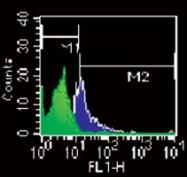 MAB0071 - CD284 / TLR4