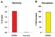 MAB0118 - Estrogen receptor alpha