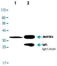 MAB2695 - MAP2K6
