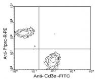 MAB3232 - CD45 / LCA