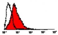 MAB3369 - CD178 / Fas Ligand