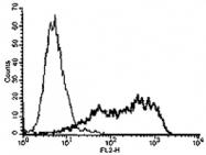 MAB3436 - TNFRSF21 / Death receptor 6 (DR6)
