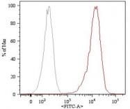 MAB3850 - CD105 / Endoglin