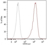 MAB4501 - CD105 / Endoglin