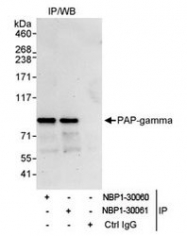 NBP1-30060 - PAPOLG