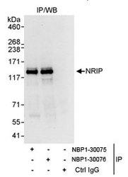 NBP1-30075 - NRIP