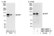 NBP1-30076 - NRIP