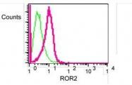 NBP1-40737 - ROR2