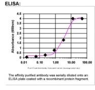 21490002 - Protein ALEX