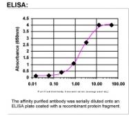 23340002 - IFNA1 / Interferon-alpha 1