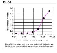 26800002 - MAS proto-oncogene
