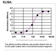 31410002 - Follistatin-related protein 1