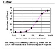 37530002 - Elafin / PI3