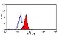 NBP1-25937 - CLEC7A / Dectin-1