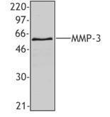 NB100-78555 - MMP-3