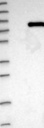 NBP1-89268 - ACSL3