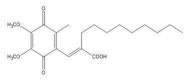NBP1-49581 - APEX1 / REF-1