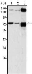NBP1-47467 - ATP2C1