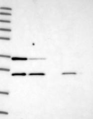 NBP1-91689 - ATP5F1
