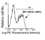 NBP1-28052 - CD249 / Glutamyl aminopeptidase
