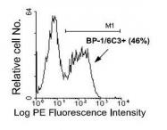 NBP1-28051 - CD249 / Glutamyl aminopeptidase