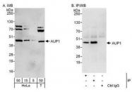 NBP1-49916 - AUP1