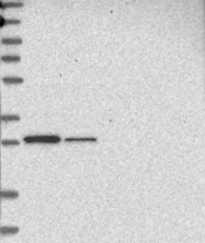 NBP1-88161 - CCDC44
