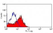 NBP1-40967 - CD137 / TNFRSF9