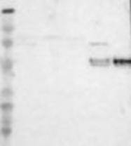 NBP1-86166 - CD14