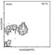 NBP1-28293 - CD28