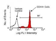 NBP1-26582 - CD44