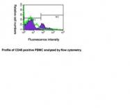 NBP1-04274 - CD45 / LCA