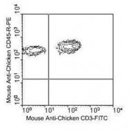 NBP1-28299 - CD45 / LCA