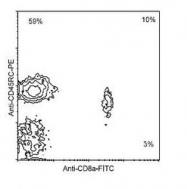 NBP1-28134 - CD45 / LCA