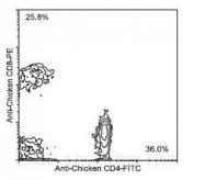 NBP1-28273 - CD8