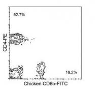 NBP1-28335 - CD8