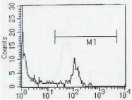 NBP1-47335 - CD8
