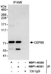 NBP1-40350 - CEP68