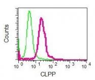 NBP1-96007 - CLPP