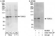 NBP1-46832 - CRTC3