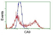 NBP1-47688 - Carbonic anhydrase 9