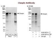 NB100-248 - Claspin