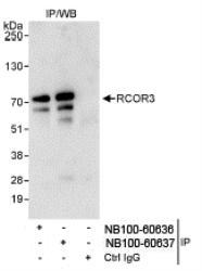 NB100-60636 - RCOR3