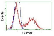 NBP1-47708 - Alpha-crystallin B chain