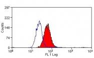 NBP1-41013 - Cytochrome b-245 light chain